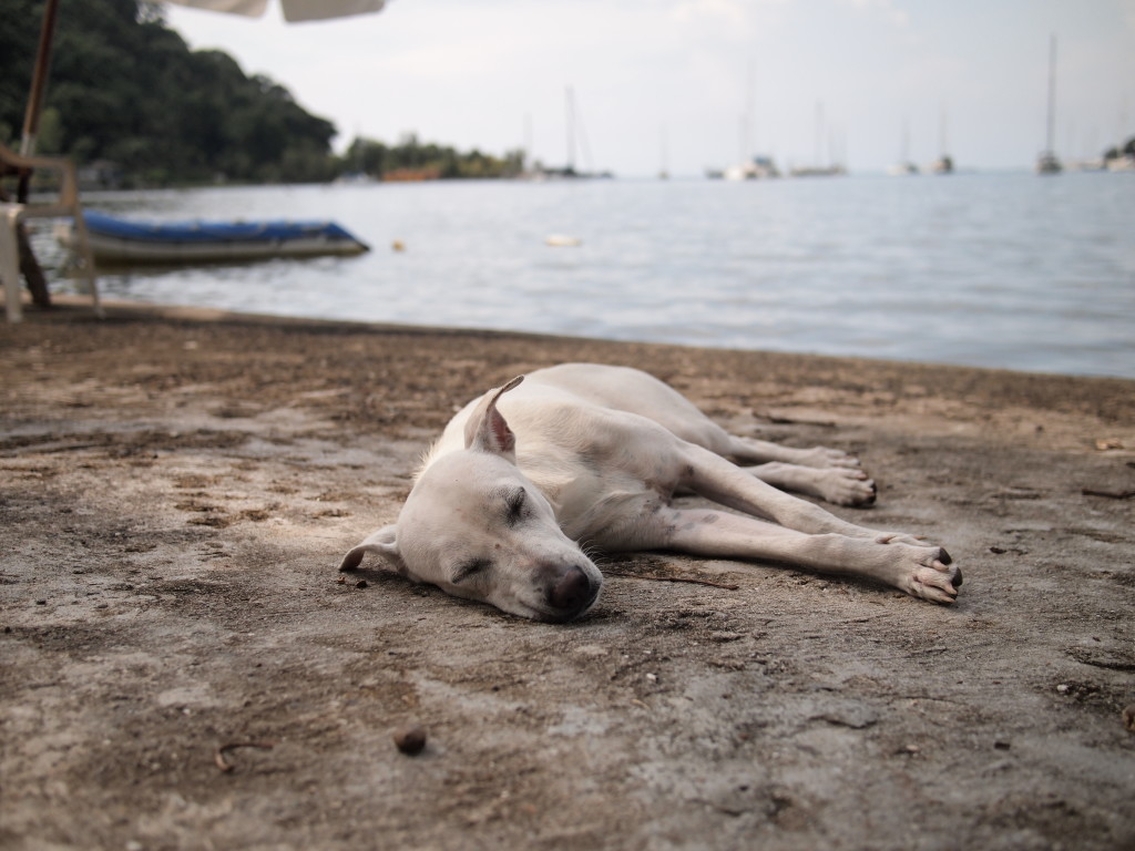 white dog contentedly sleeping on the sand with ocean and boats in the background