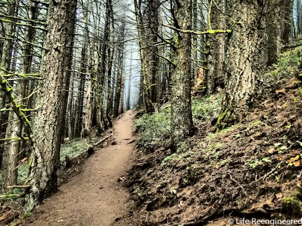 The trail at Dog Mountain, on the Washington side of the Columbia River.